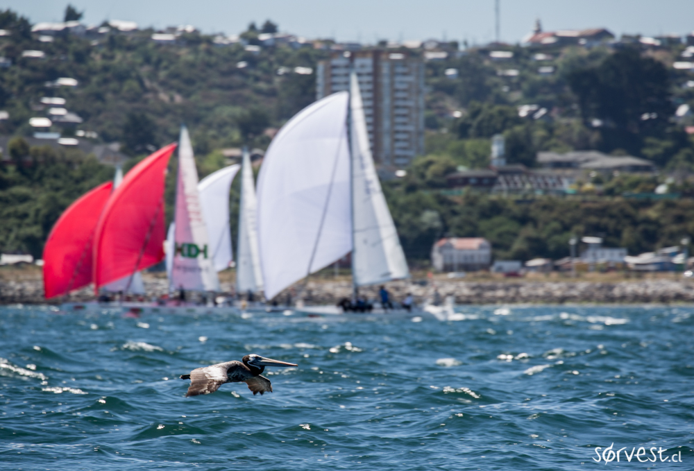 Fotos Día 8 Regata Santander Chiloé 2016